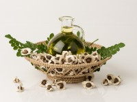 Exotic hair oils. Top-rated products with moringa oil